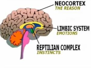 brain-reptilian1